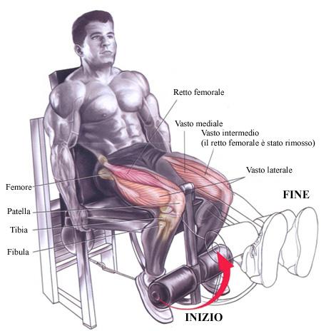 Necessita Del Potenziamento Muscolare Delle Gambe Podisticamente It