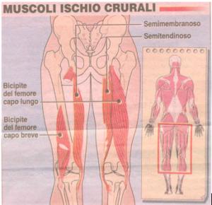 10-04-muscoli-ischio-crurali