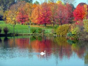 autunno_rit